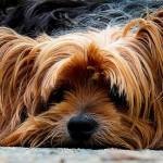 dog-200942_1920